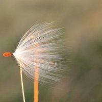 Ветер предзакатной степи... The wind of the sunset steppe... :: Сергей Леонтьев