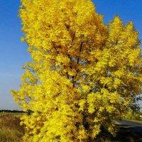 . Ясень в Октябре :: vodonos241