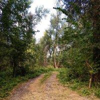 Дорога в лесу :: Владимир Науменко