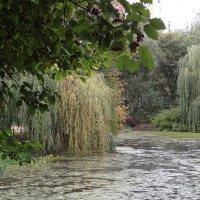 Старый пруд и ивы :: ZNatasha -