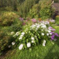 В моём саду :: Татьяна Смирнова