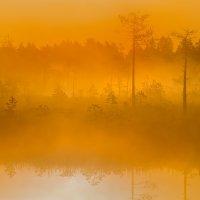 Оранжевый туман :: Фёдор. Лашков