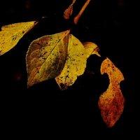 Осень в объективе :: Леонид leo