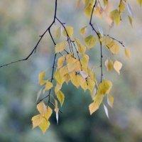 Что наша осень?.. :: Wirkki Millson