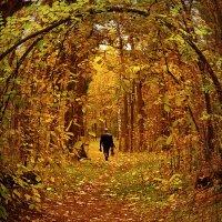 Осень в парке 2 :: Сергей Розанов