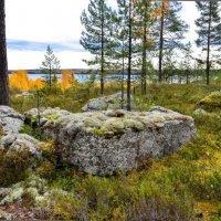 Карельский лес у озера :: Георгий