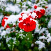 С первым снегом :: astanafoto kazakhstan
