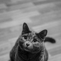 Любимый кот) :: Julia Volkova
