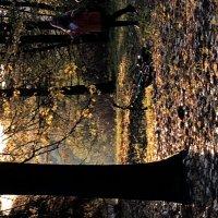 Золото листвы :: Ксения Черных