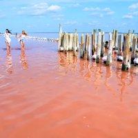 Розовое озеро Сасык-Сиваш :: Ольга Голубева