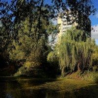 Старинный пруд в Аптекарском огороде. :: Татьяна Помогалова