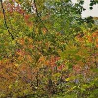Краски октября... :: Sergey Gordoff