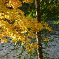 Осенняя сказка :: Ирина - IrVik