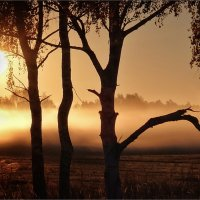 Утро :: Михаил Дрейке