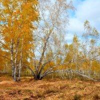 Октябрьские дни :: Mikhail Irtyshskiy