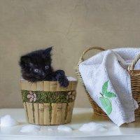 - Ну как этим людям объяснить, что  черного котенка не отмыть до белого? :: Ирина Приходько