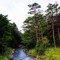 горная речка :: Slava Hamamoto