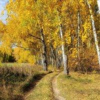 Золотая осень :: Igor Yakovlev