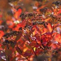 Солнечная осень :: Swetlana V