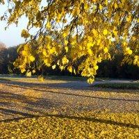 Осень золотая :: Kliwo