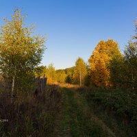 Пейзаж с забором :: Александр Синдерёв