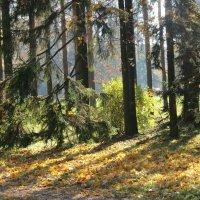 Осенний лес :: Людмила