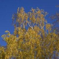 на фоне синего неба :: Петр Беляков