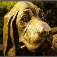 Собака   с   грустными   глазами. :: Алексей. панкратов