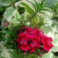 Осениие цветы :: Елена Семигина