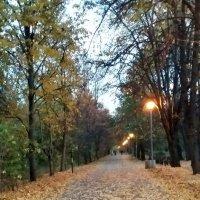 Осень бежит по дорожке! :: ирина