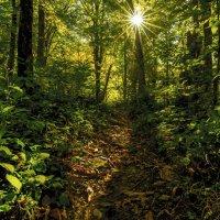 Солнечный лес :: DALAR ***