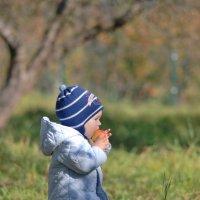 Яблочный 18-ый год продолжается и в октябре) :: Светлана Былинович