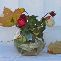 осенние розы :: НАТАЛЬЯ