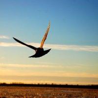 Редкая птица долетит до средины Северной Двины.. :: ИгорьОк Бородин