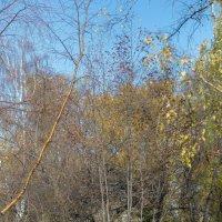 Устала осень :: Борис