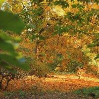 золотая осень :: tina kulikowa