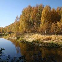 Позолотила осень Клязьмы берега :: Татьяна Георгиевна
