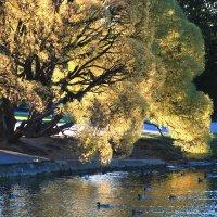 Золотая ива. :: LIDIA V.P.