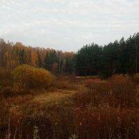 Лес вдали виднеется прекрасный – от буйства красок пьяная земля :: Елена Павлова (Смолова)