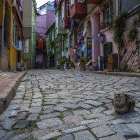 Стамбул -кошкина столица :: DALAR ***