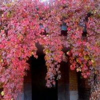 Осенние кружева украшают дом :: Елена Семигина