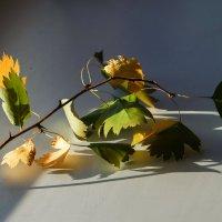 Осень на окне. :: Наталья ***