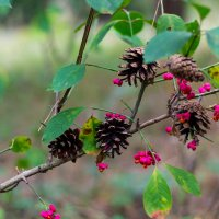 цветы в лесу :: Ustas FritZZZ