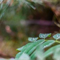 после дождя :: Ustas FritZZZ