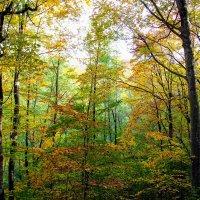 Осень в огне 3 :: Вячеслав Случившийся