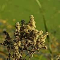 Золотая осень на озере :: Олег Пучков