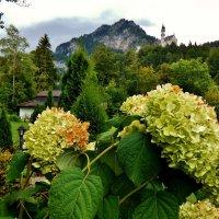 Высоко  на скале  стоит замок  Нойшванштайн :: backareva.irina Бакарева