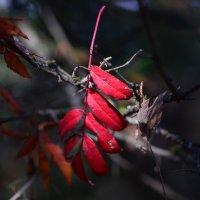 Осенний лист :: Татьяна Соловьева