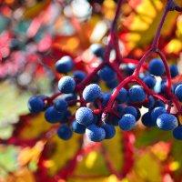 Осенние драгоценности... :: Тамара Бедай