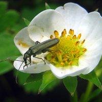 Жизнь жука. :: оля san-alondra